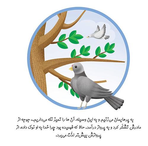 چرا خدا به کبوتر نوک داده است ؟